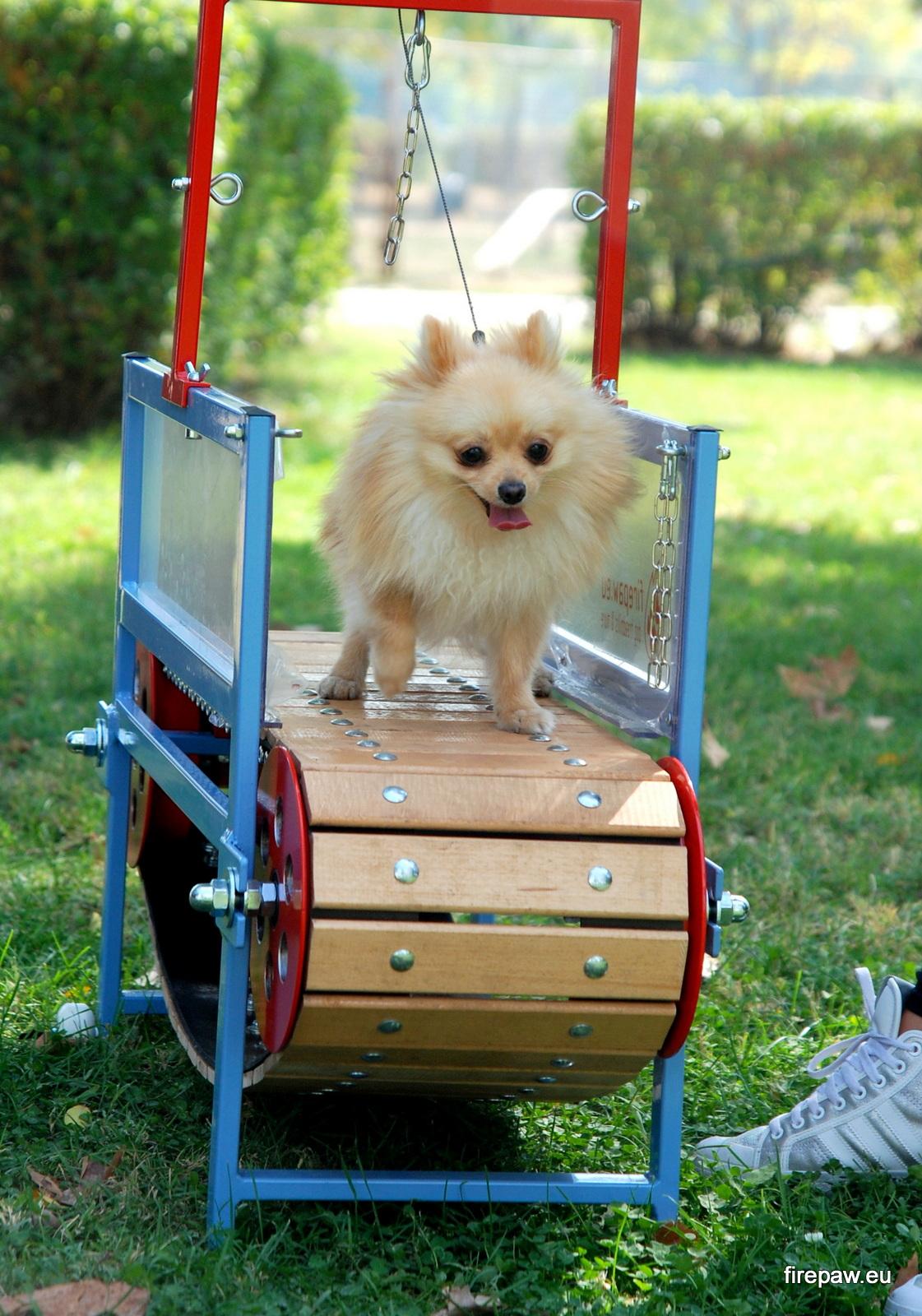 Firepaw Mini Dogs Treadmill Firepaw